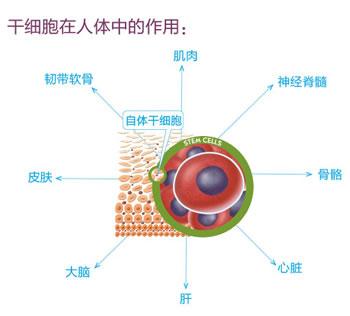 干细胞注射除皱 让肌肤保持年轻态
