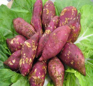 减肥:红薯
