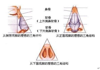 鼻子形状分类图解