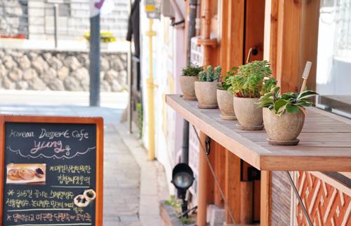 韩国咖啡店门口小盆栽
