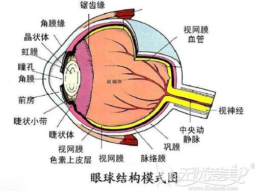 眼部血管繁多,选择医院需要谨慎
