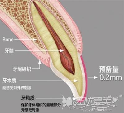 牙齿的组成部分