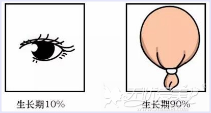 睫毛生长期