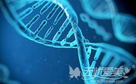 易胖体质的基因
