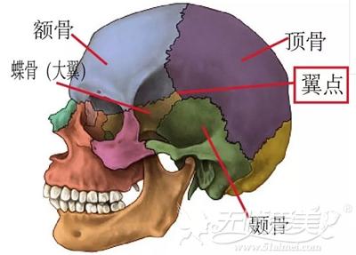 颧骨颧弓部位面部解析图
