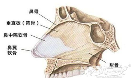 鼻子的主要结构