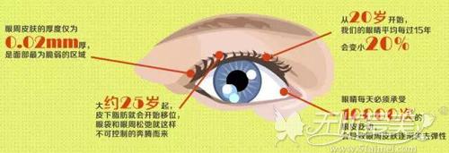 眼睛每过15年大概会变小20%左右