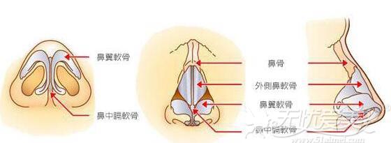 鼻部内部构造