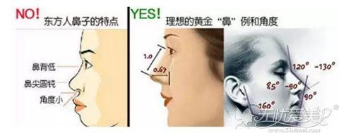 完美鼻型比例