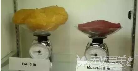 脂肪和肌肉的质量