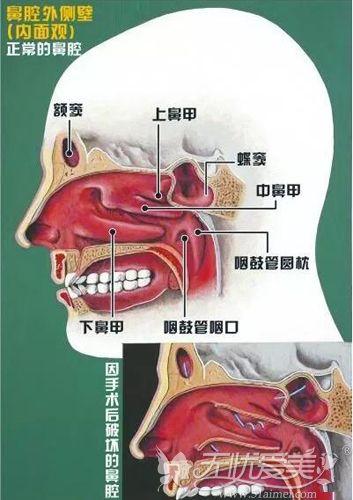 鼻子内部结构