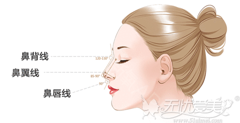 鼻子的标准弧度