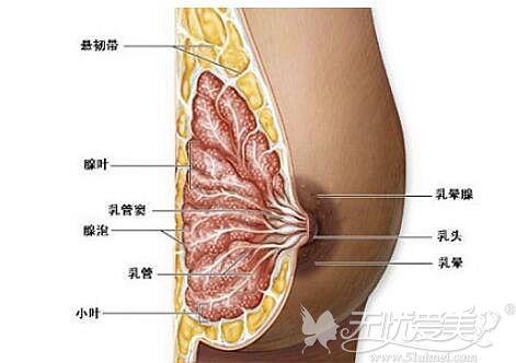 胸部吸脂以后影响哺乳吗?