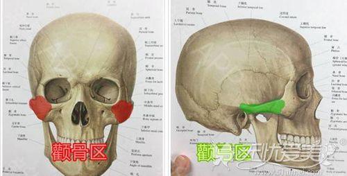 颧骨和颧弓的位置