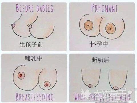 乳房在女性孕期到哺乳的发育过程