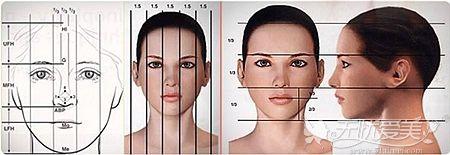 面部轮廓的理想比例