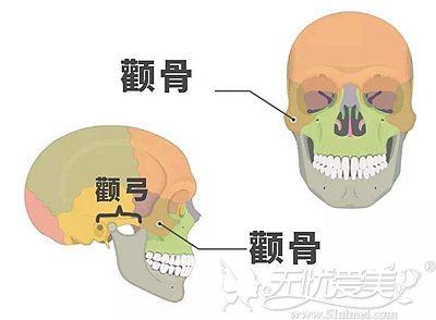 颧骨颧弓在面部的位置