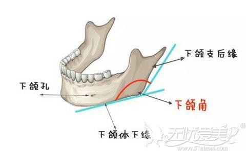 下颌角是下颌体下缘和下颌支后缘角度