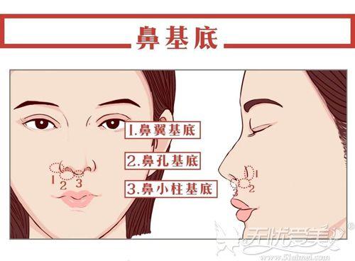鼻基底的位置