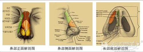 鼻子内部的结构