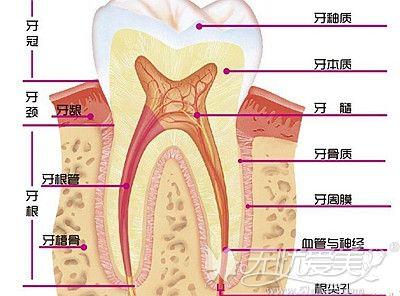 活髓牙和死髓牙的区别