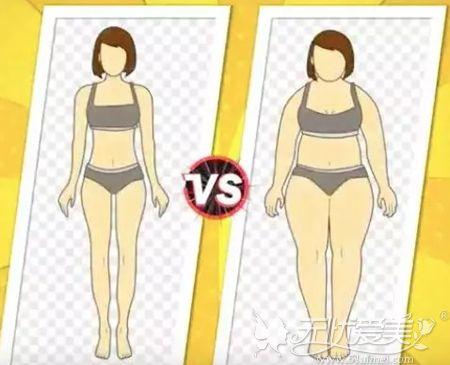 胖瘦的对比