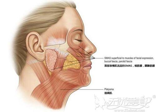 颈阔肌的位置