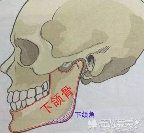 下颌角蓄削骨有安全区域