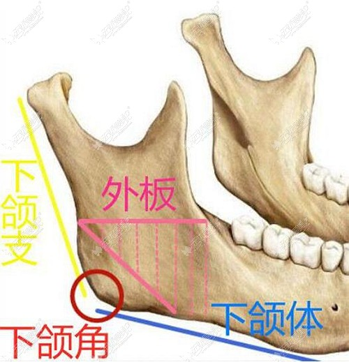 下颌角外板的位置