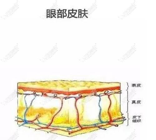 眼部皮肤层次分析图
