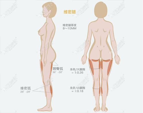 大腿吸脂3000CC瘦的会多吗,腿围多久有变化,能瘦5cm吗